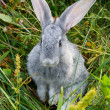 Stock Photo: Adorable bunny