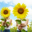 Stock Photo: Behind sunflowers