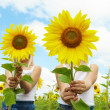 Behind sunflowers - Stock Photo