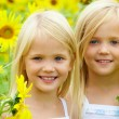 In sunflowers - Stock Photo