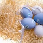 Several colored eggs — Stock Photo