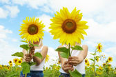 Behind sunflowers — Stock Photo