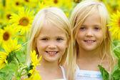 In sunflowers — Stock Photo