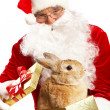 Santa with cute pet — Stock Photo