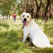 Purebred dog - Stockfoto