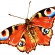 Bright butterfly - Stock Photo