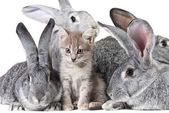 Cute animals — Stock Photo