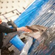 Feeding porpoise — Stock Photo