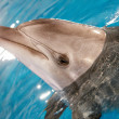 Stock Photo: Dolphin in water