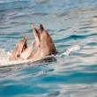 Dolphin couple in water — Stock Photo
