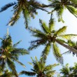 Palms and sky — Stock Photo #11583745