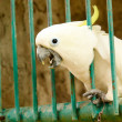 Parrot - Stock Photo