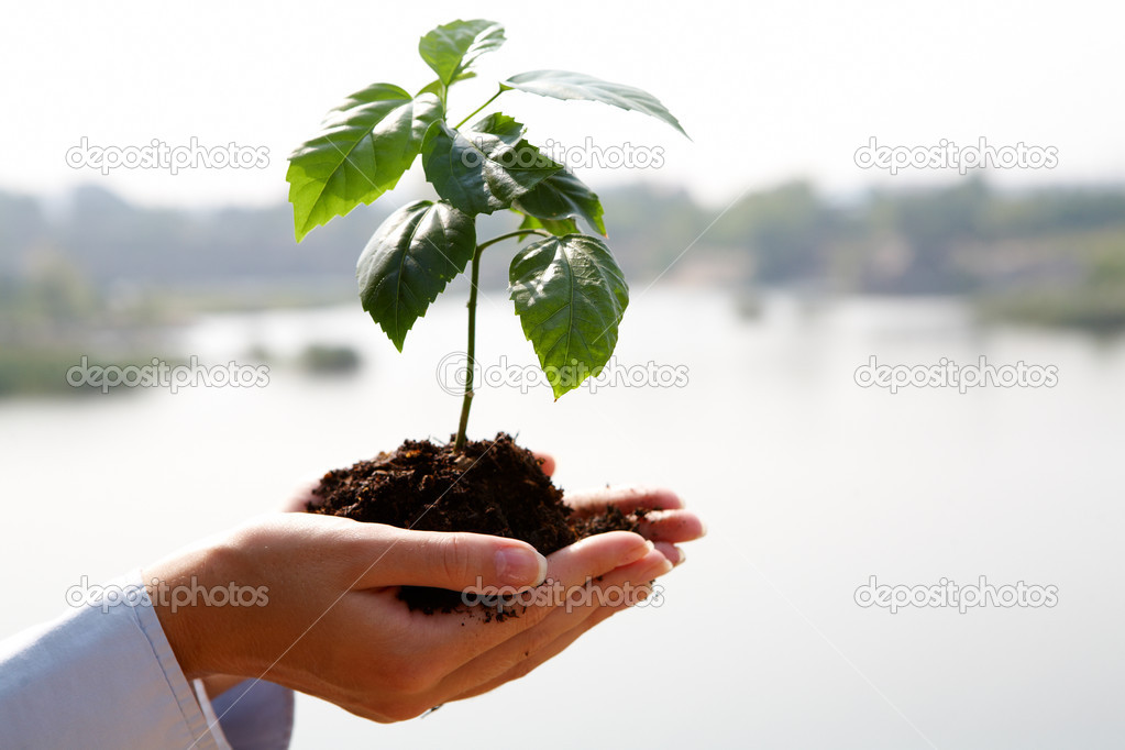 Close-up of fresh branch with leaves in soil held by a human — Stock Photo #11583620