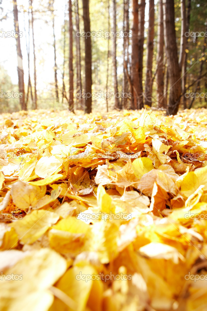 Photo of autumnal leafage in the forest — Stock Photo #11628090