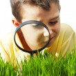 Stock Photo: Studying grass