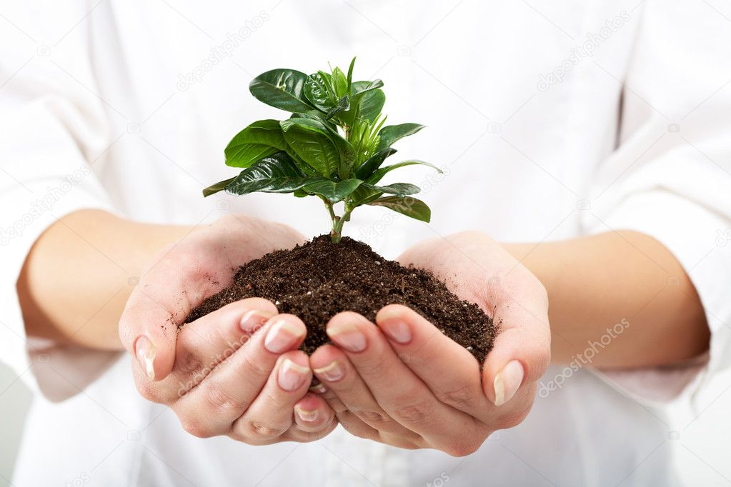 Photo of human hands holding little sprout with care — Stock Photo #11631876