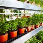 Garden center — Stock Photo
