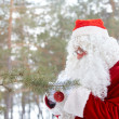 Preparing forest for Christmas — Stock Photo #11672710