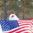 Santa patriot - Stock Photo