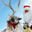 Santa's drag animal - Stock Photo