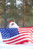 Santa patriot — Stock Photo