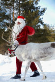 Santa with his reindeer — Stock Photo