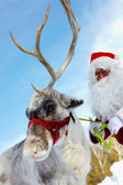 Santa's drag animal — Stockfoto