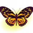 Stock Vector: Black and yellow butterfly
