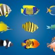 Royalty-Free Stock Vector Image: Exotic fishes