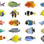 tropikal balıklar kümesi — Stok Vektör #11697698