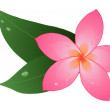 Red plumeria - Stock Vector
