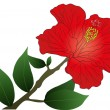 hibisco — Vector de stock