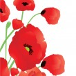 Vector de stock : Beautiful poppies