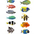 Tropical fishes — Vettoriali Stock