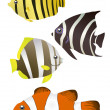 Tropical fishes — Stock Vector #11698365
