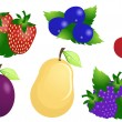 Ripe fruits and berries - Stock Vector