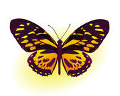 Black and yellow butterfly — Stock Vector