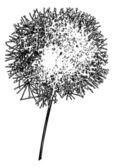 Dandelion outline — Stock Vector
