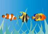 üç tropikal balıklar — Stok Vektör