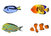 Four tropical fishes — Stock Vector