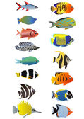 Tropical fishes — Stock Vector