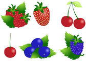 Ripe berries — Vector de stock
