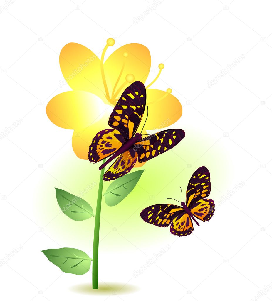 Vector illustration of a yellow flower with two butterflies flying around — Stock Vector #11695809