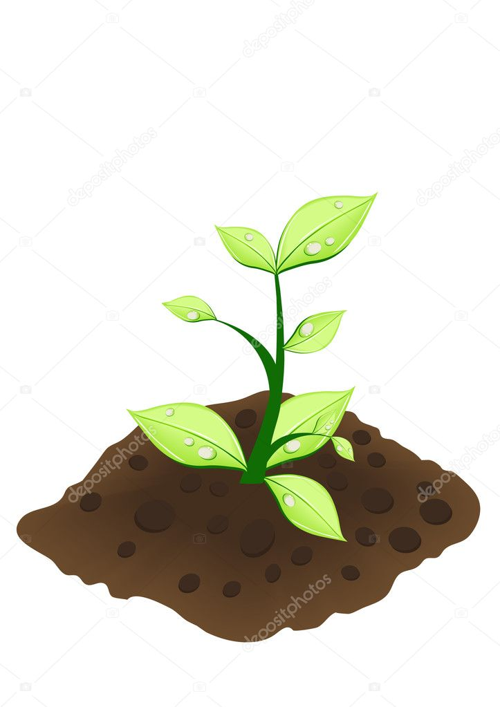 Vector illustration of small green plant — Stock Vector #11696081