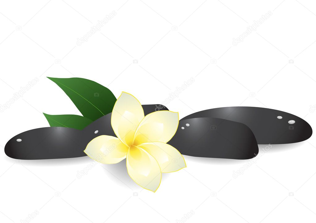Vector illustration of black pebbles and frangipani on white background  Stock Vector #11697334