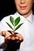 Crecer un árbol — Foto de Stock