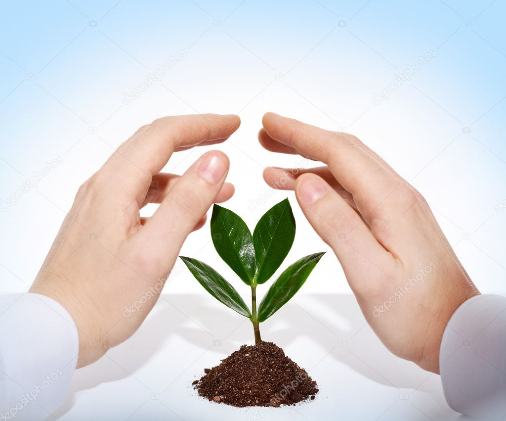 Male hands offering protection for a new sprout  Stock Photo #12501923