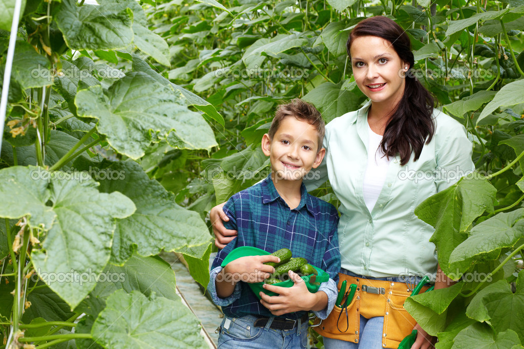 Woman and her son with crop of cucumbers in the greenhouse — Stock Photo #12519444