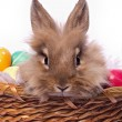 Stock Photo: Bunnie's portrait