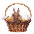 Easter bunny in the basket — Stock Photo #10881375